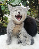 Kittens looking for a home Dnipro