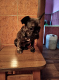 Urgently selling a puppy Dnipro