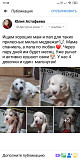 Puppies for free! Чугуев