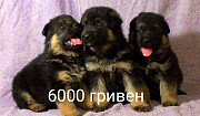 Puppies for sale Kiev